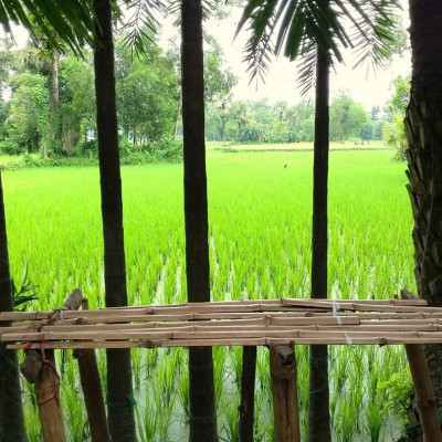 Bhomra is one of the land ports of Satkhira district. A farmer can see a paddy field next to it. He has come to the side of the road and built a house. He can see his paddy field next to it.