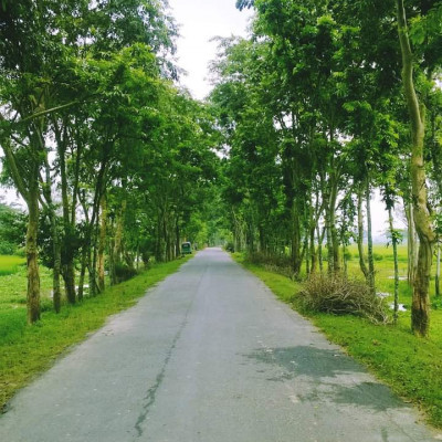 Here you can see a picture of a street.  It is located in Asashuni village of Satkhira district. We were going to Asashuni together and took a picture of the road.  You can see with my phone that there are a lot of green plants growing on both sides of the road and it is very nice to see them.  You can see that there are many small and big trees along the two rows of the road. It is very nice to see the trees. We can see a lot of big and big vehicles passing through this road.  People go from one place to another by road. We see that it is very beautiful to see many green crops being cultivated in a single field on the side of the road. You can see that a village has a lot of people living in that village.  We can see that the view around this khan is very beautiful.  We can see more of the white sky above.