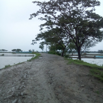 This picture is a beautiful street picture.  This is a beautiful road made of mud.  It looks so beautiful.  There are many different types of trees along its banks.  These look very beautiful.  There are different types of small and big fish farms along this road.  Which can be seen in this picture.  Beautiful water filled fish farms on both sides of this road.  There are beautiful trees along the road. The big tree that can be seen here is a baby tree.  There are beautiful green grass on this side. There are also beautiful bushes.  Different types of flowers bloom in it.  It looks very beautiful. Many people pass through this road every day.  This is a beautiful dirt road along the river in our area.