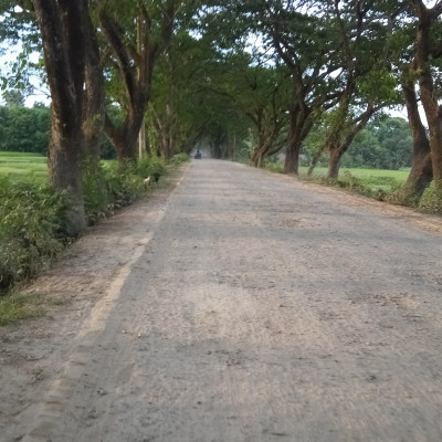 Friends, you can see a beautiful pitch road. The pitch road usually looks very clean and tidy and that is why this road is used by a lot of people here and everyone is seen with private car motors.  The pitches are up.  This road is next to the village.  This road is 10 km away from Satkhira and you can see rows of trees on its side and it looks very beautiful.  These green trees are very beautiful to look at.  One essential thing is that the tree gives us oxygen.  There are lots of trees on this side of the road and planting trees on the side of the road means very good.  It is very beautiful to see the trees planted here.  Nice to see lots of trees.  It is very nice to see the view of the pitch road next to the village.  Hope you like it. If you like it, please like, comment and share. Thank you all.
