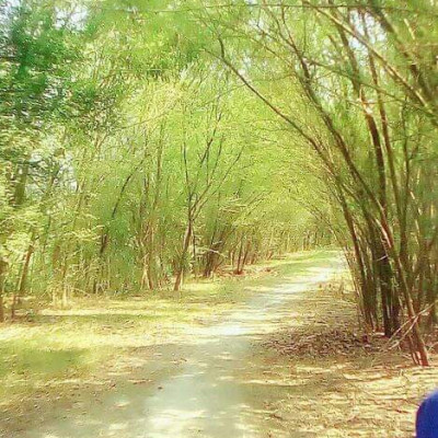 "This natural beauty is located on the Kopotaksh river in Tala upazila of Satkhira district.  To the local people it is known as ""Aral Forest""."