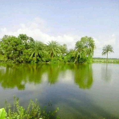 You can see here a picture of a beautiful village scene. It is very beautiful to see this picture.  It is located in Dhulia village of Satkhira district.  We can see a huge pond here.  There is a lot of water in the pond.  We can see that the water in the pond is blue and many fish are cultivated in this pond.  We can see that they make a living by selling these fish in the market.  We can see that most of the people here are fish farmers and they love fish farming.  We can see that there is a lot of vegetation in the village to bathe in the pond.  These look very nice.  We see a field of green trees planted around the pond.  These look very nice.  We live in a rural village.  We can see the white clouds floating in the blue sky above.