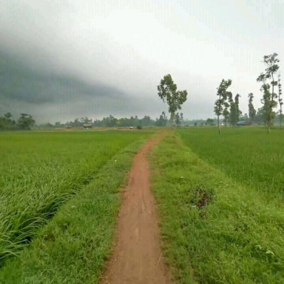 A beautiful road in rural Bengal, we can see here the agricultural fields around and the green plants we can see here, it looks very beautiful, there are different types of nature beauty in our country, there are different types of green lands here.  We can see a picture The picture was taken in the evening We can see many beautiful scenes in the sky It is very nice to see people from different places because it is very nice to see the afternoon scene here and also to spend the afternoon here All  the big and small people come here to visit together There are people visiting from different places and money is earned by selling tickets here so it can be said that Bangladesh is full of green landscapes of natural beauty