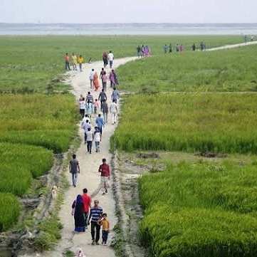The drawing of green on the chars that arose in the river Jamuna.  The picture was taken from Hasnapara area of ​​Sariakandi upazila of Bogra on Friday morning.