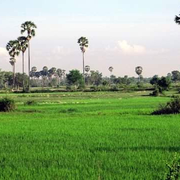 Hi friends, take my greetings.  You can see this picture is a beautiful rural landscape.  Bangladesh is full of natural scenery.  And this is a picture of a rural Bengal.  This picture shows a beautiful field.  In that field many crops are being produced.  Paddy trees have been planted here.  The trees have not grown that way yet.  This rice is the main crop of Bangladesh from which we get rice and rice.  This picture is very nicely taken.  This picture shows a lot of big trees.  These trees are called palm trees.  The palm trees are very beautiful to look at.  And the leaves of this palm tree form a round shape.  Which is why these look more beautiful.  This picture shows a distant village.  And the sky is visible.  That picture looks very beautiful.  In this picture, clouds have risen in the sky.  That made the white clouds in the sky.  I hope you like it.
