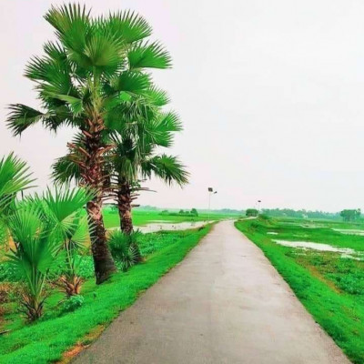 Our Naogaon is a green land of great beauty. This year a beautiful road has been made through the village in a very beautiful way. Various types of palm trees have been planted along the road. There are also ponds where people keep different types of fish. This road is winding through the village. Road lights have been given one by one after a few days on the road. Beautiful grass can be seen on both sides of the road. Vehicles like motorcycles, motorbikes, motor vans, etc. usually pass through the village. The people of the village have benefited a lot because of this road. They are able to travel to different cities through this road. Made a very beautiful road. Such a beautiful road of Sheikh Hasina's Bangladesh can be seen through the village. This is the most beautiful road I've ever seen. The road has been made about 5 km.