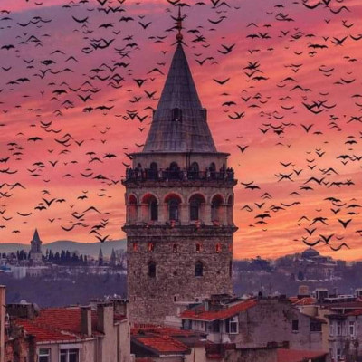 Istanbul, Turkey.  In the evening at this beautiful Turkish city, and especially at dusk, you can see pictures of flying over and around a building, and you can see countless mountain birds flying around, and you can see the beautiful atmosphere here.  The beauty and the beautiful scenery of this color in this color is much better to see and this is the place where the building is very old which is why these places can be seen around this building.  And the amazing beauty scenes of this beauty are revealed here. You will feel more developed beauty. You may also like to see these beautiful environments in front of you. If you like seeing different types of Turkistan, then you must like and comment.