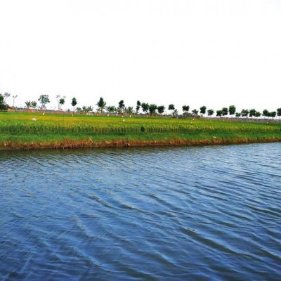 Here we see a picture of a beautiful pond.  This picture looks very nice.  It is located on our big farm in Satkhira district.  We can see here that there is a beautiful pond.  There is a lot of water in this pond.  We know that fish is farmed in ponds.  Because no one leaves the pond empty because if the fish is farmed in the pond, even if it is less than the money can be found, so it is very nice to see the fish have been farmed in this pond.  We can see that they are making a lot of money by selling fish from the pond.  We can see that there is a small fish above the pond. Paddy has been cultivated in this field.  These rice looks very beautiful.  We know that farmers work very hard to earn money from paddy cultivation and it is very nice to see these.  We can see that there is a road next to it and the people of the village travel along this road.  These are very nice to see.  We can also see the white clouds floating in the blue sky above.  It looks very nice, I hope we like it very much.