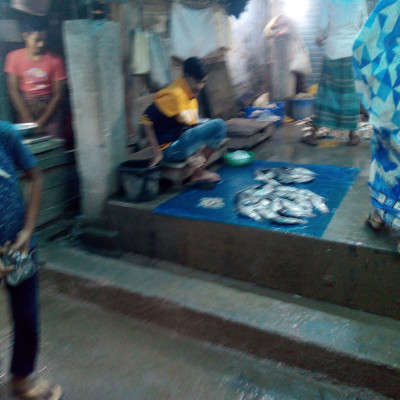 we love to eat a variety of foods.  Here is a fish market scene in the picture.  And this fish market has been taken from Sadhannagar of Satkhira district.  The fish market seen here is the largest fish market in Satkhira district.  Here you can see that different types of fish are being sold.  And the shopkeepers are sitting with different kinds of fish.  Lots of big fish can be seen here.  And there are many types of fish in this fish market.  There are many kinds of fish in the picture.  One of these months is tilapia pangas silver cup fish shrimp fish etc.  Satkhira district's largest popular market fish market scene can be seen in this picture.