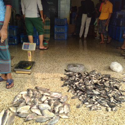 The picture presented here is captured by me from the Boro Bazar .In the picture it is evident that there is a kind of fish .All kinds  Of fishes are kept to sell to the customers .You will be able to buy such fishes at a cheaper price from this Market .I wholeheartedly believe that this fishes will help you to remove the deficiency of nutrition .I wholeheartedly like to have the taste of such fishes so that I can get enough nutrition to lead a healthy and a dignified life .You will be immensely pleased to the fishes presented here . Obviously such fishes are found in every corners of Bangladesh that means in every markets in Bangladesh .