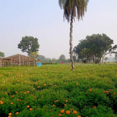 Winter is actually seen in different areas of flower cultivation scenes just like you can see a beautiful flower garden and this place is a picture of the flower garden of Satkhira Mozaffar Garden.  This donkey fruit is valuable and can be sold at a high price. There are a lot of marigolds grown there. It looks very beautiful. The environment of this place is very busy. There are many employees here.  There are flowers blooming which is really amazing in an environment like rural Bengal. Besides, most of the people can be seen everywhere in the front yard of their house. Many times in winter there are different types of donkeys.  Different meetings require different types of celebrities to make different guests, especially when it comes to decorating the living room  This is why this kind of flower looks so beautiful in the production. You will love this beautiful view of this green and yellow flower garden. There is a natural environment here to enjoy the beauty and breath and you may also like the beautiful scenery by looking at the surroundings.  If you like it, you must like and comment on our channel.