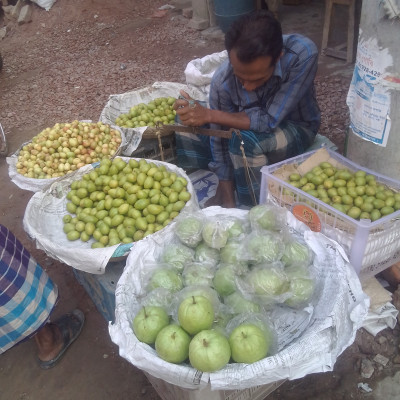 Guava contains vitamin C.  That is why we should eat more guava.  In the picture we see a man selling big guavas and cool.  In Bangladesh at this time most of the cool is due to the fact that most of the cool can be seen in the market.  Moreover, it is very good to eat cool.  The people of Bangladesh love to eat cool and guava. In fact, guava is available in very small quantities in Bangladesh at this time due to the high demand and price in the market.  The price of one kg of guava in the market is seventy rupees. Guava can be seen in very few places in Bangladesh now.  A guava contains the same amount of vitamins as four apples, so we should eat more and more guavas.  I love to eat and see the guavas.  I hope you enjoy the guava. To be honest, guava contains a lot of vitamin C which is very good for our body.  Hope you like the picture.