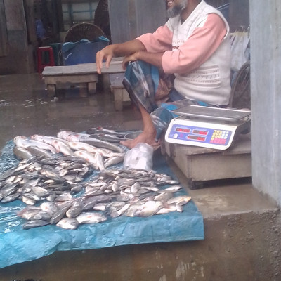 Fish is very dear to Bengalis.  Because the people of Bangladesh like to eat fish very much.  Moreover, it is very good to eat fish. To make up for the lack of fish meat, we should eat more fish.  Fish is farmed in large quantities in Bangladesh.  And the fish is exported to other countries to meet the demand of the people of the country.  In the picture you can see a man sitting in the market selling different kinds of fish.  Here you can see Rui, Tilapia, Silver Cup and many more types of fish that you can see in the picture.  The picture has been taken from our market. Besides, most of the people of Satkhira district buy different types of fish from here. But the most favorite fish of Bengalis is Hilsa.  It is again known as the national fish of Bangladesh. Because hilsa fish is very tasty to eat.  The fun of eating it is different. In Bangladesh, the price of hilsa fish is high and the cultivation is very low.  Hope you like the picture of the fish market.