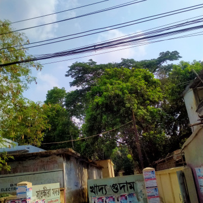 The picture presented here is awesome and it is captured by the help of my phone from Satkhira Sadar, Satkhira.  There is house in which there are many rooms that are used for the official purpose. There are trees everywhere in which there are many green leaves that symbolize youth and freshness. There are electronic wires that provide electricity to the people. You will be immensely pleased immediately  after seeing the excellence of the creation of Allah and human architecture.