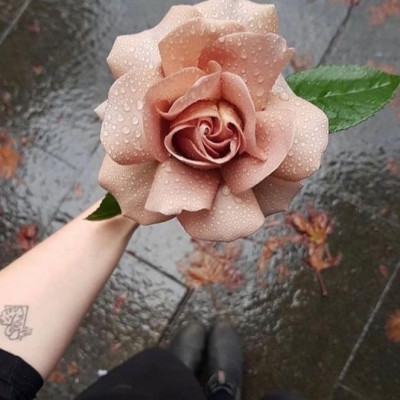 One of the most beautiful roses I have ever seen, what do You mind??