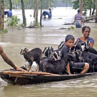 Looking at this picture, you can see that the goats are being taken by boat in the flood, the water has flooded all over the place and the animals are there, so the animals are being taken away by the goats.This scene is a very beautiful flood scene