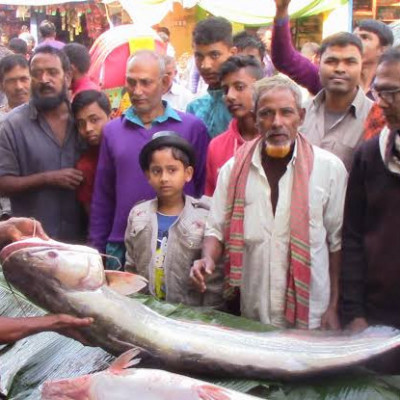 The picture you are looking at is a picture of a fish market in the village of Andul in Satkhira district. There is a lot of fever to see this fish.  And it can be about 50 kg and this fish is a big fish, many people have come to see a picture of it.
