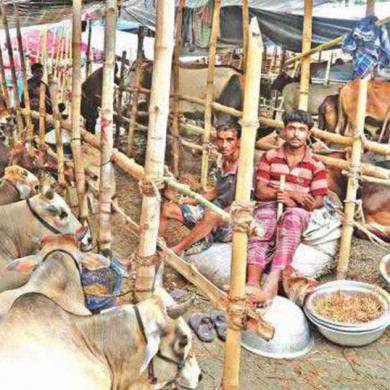 Twenty-seven cattle markets, including two permanent ones, are being mulled by the two Dhaka city corporations ahead of Eid-ul-Azha, the second biggest religious festival of the Muslims, scheduled for later this month.Dhaka North City Corporation has decided to set up 12 markets or haats, including a permanent one in Gabtoli, while Dhaka South City Corporation  decided to set up 15 haats, including a permanent one in Sarulia.