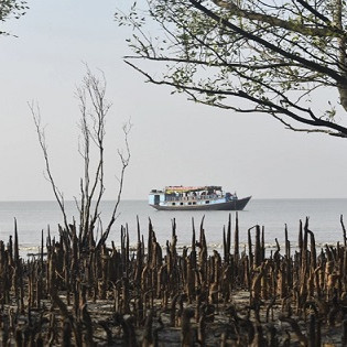 This picture is taken from inside the Sundarbans.  This picture shows a large boat going through the middle of the sea.  And it turns out that there is this river and there are also two big trees.  The leaves of one tree are very low and another tree is seen lightly it is a beautiful landscape.  It is the Sundarbans of Satkhira district of Bangladesh.