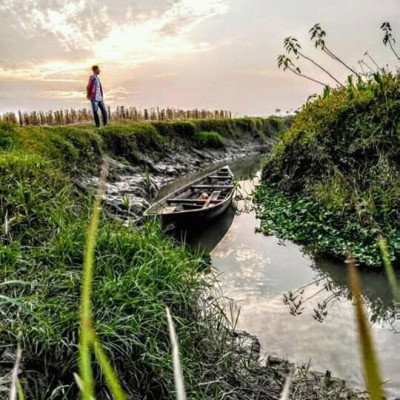 A view of the beautiful nature of the village is seen, a narrow curved canal flows through the crop fields, a boy is standing on the canal, this scene is a view of the village of Bayladesh, there is a small boat in the canal, it is very fun to ride the boat,  The view is very beautiful.