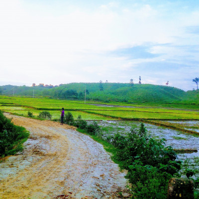 This picture is of a beautiful mountain. The picture is of Garo hill of Nalitabari police station of Sherpur district. Here you can see some high hills and sometimes some big trees are standing on the hills. The hill is full of greenery. There is arable land at the foot of the hill. The lands have been planted with rice seedlings. This picture is of a hilly path. There are small green bushes around the road. A boy is standing on the street taking selfies. Elephants are a big threat to these lands in the mountains. When the paddy starts to ripen, the elephants come and destroy the crop.