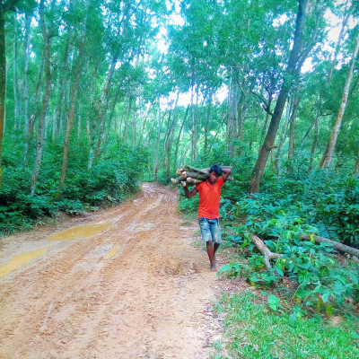 This picture shows a boy cutting wood from a hill. The boy's name is Raihan. He is from a poor family. He is a carpenter. She is wearing an orange vest and a pair of jeans. His only job is to make a living by cutting wood from the hills.  The picture shows a hilly path and big hill trees on both sides. The hilly path is muddy. It is the only entrance to the mountain.  This is the way people move. The boy occasionally works as a gardener in the hills. He gets 250 rupees for his work.