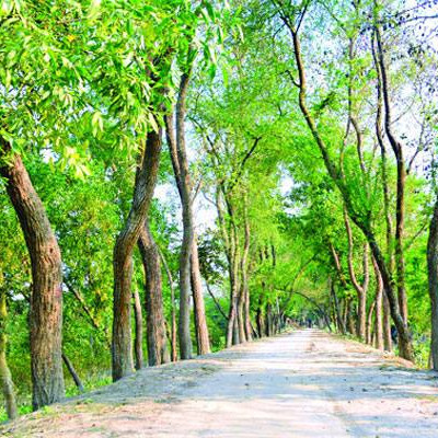 As you can see in the picture, this is a street picture. It was taken from Jessore district. We took this picture while visiting here and we were very happy.  In this picture you can see that there are many big green plants in the two rows of the road.  The leaves of this tree look beautiful.We can see more here. There is green grass on both sides of the road.  And on the side of the road there is a crop field we can't see and we can see that there is a white and blue sky when we look up.  It looks so beautiful.Looking at this road, it seems that there are green plants all around the road and looking at its four sides, it seems that this picture of green nature looks very beautiful.  And we like this picture very much. I hope you like this picture very much.