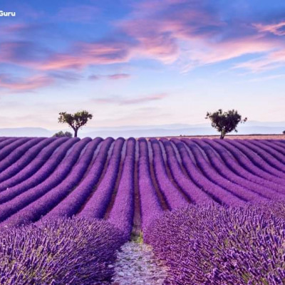 The Provence Lavender-fields are among the best in the world, and they're certainly among the most famous.If you want to see the beauty of Lavender-field, early July is the best time to go to Provence, France.  The entire region is peppered with vibrant purple fields. And, if you get in before the school holidays (which normally start after the first week of July), you're more likely to beat the crowds. From mid-July lavender fields start to be harvested in the Valensole plateau.Another Travel Bucketlist
