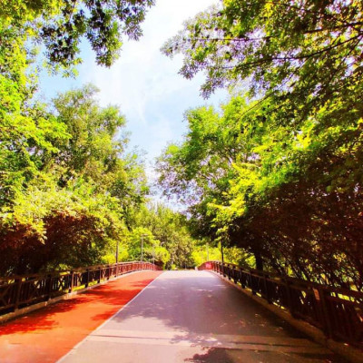 You can see a view of the main road of Jhikargachha upazila of Jessore district.  This road is very neatly constructed.  Green vegetation is visible on both sides of the road.  The road looks very beautiful as well as the greenery.  The people of the upazila go to Jessore city through this road. Many influential people and businessmen live in this area.  This upazila is considered as the surrounding area of ​​India.  Which is why they love to do business.  They have very good communication with India.  They have very neatly arranged this upazila.  You can see people walking on the road with red signals made by putting many signals.  I hope you like the beautiful view