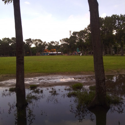 This is Satkhira Government College ground.  It can be seen here that there are plants around the field.  And it's a big field. The field has green grass.  The game of cricket is usually played on an oval or oval-shaped field with a grassless section of a few yards in between, called a pitch.  There are three long wooden sticks or stamps at the two ends of the pitch.  ঐ On top of the three stamps or on the head are two small pieces of wood or bails.  This wooden structure is called a wicket with the help of stamps and bails. One of the two teams participating in cricket is batting and the other is fielding.  There are two batsmen on the field for the batting team.  However, if the batsman is unable to run for any reason, an additional player of the batting team can come on the field.  He is known as Runner.  Eleven players from the fielding team are present on the field.  There are different games and different events in this field.
