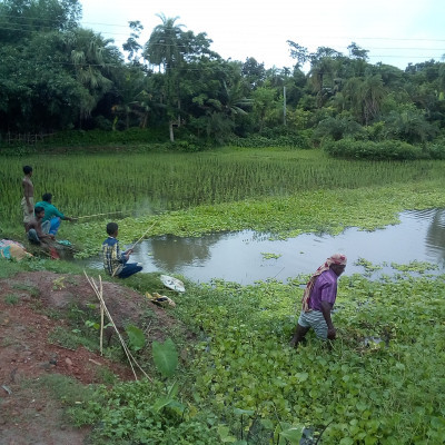This picture is of fishing in a village pond. Here some people are seen fishing with a fishing rod.  They are fishing next to a beel pond. It is a beautiful crop field. But now it is submerged in water.  There have been lots of fish here.  This is on the side of a road. There are different types of aquatic plants and water hyacinth in this pond. There are many more fishing here. They have got a lot of fish. Such fishing scenes can be seen in different places in the village.  Everyone loves to fish.  So I posted this picture. I hope you like this picture.