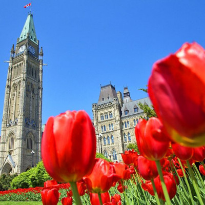 "Ottawa's spring festival marks the end of winter as the tulips - given by Queen Juliana of the Netherlands in gratitude for the city's hospitality during the Second World War - come into bloom all over the city. Canal banks and Commissioner's Park in particular, are the scene of general festivities. Major's Hill Park, southwest of the basilica, is aflame with thousands of tulips. In all, several million tulips bloom in the city, with tulip attraction sites spread out on a scenic ""Tulip Route."" Fireworks and performances are also regular attractions."
