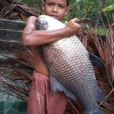 You can see a boy's house and its price and where in the village it went to the field inside Patkelghata police station with his father and his father got a big catla fish and I am coming home with it. At the moment you can see a picture here.