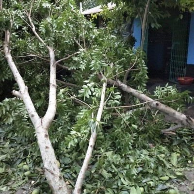 The condition of our house in Balitha village of Satkhira Sadar Police Station Union is very bad and you can see there that the house is broken, the mango tree is broken and completely destroyed. You can see a scene of it here.