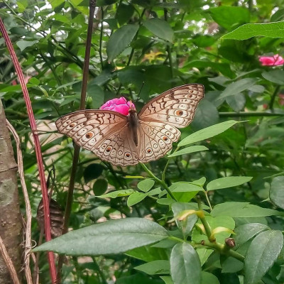 You can see a scene of a village in Satkhira Sadar district. Butterflies collect honey from different types of flowers in the village. Here you can see a scene of a butterfly collecting honey from flowers.