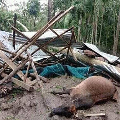 The death of animals has caused a lot of damage to human beings and human homes and even human lives have been in crisis due to this storm and this storm has made it so divisive that many really harmful aspects of human beings have been highlighted in these pictures.