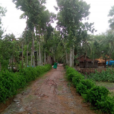 A beautiful landscape is seen in the picture.  The picture shows a beautiful road in a village.  This road goes straight into the village.  There are big mahogany trees planted on both sides of the road.  The scene looks so beautiful.