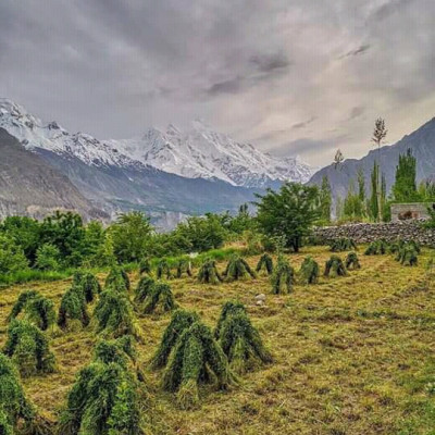 Many people cultivate green crops by planting green trees in hilly areas. It is seen in this mountain environment that green plants have gone and by planting trees they are meeting the demand for fruits and many produce crops. There are hills far away but even after the hills people try to produce such crops.
