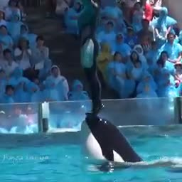 Playing with dolphin.