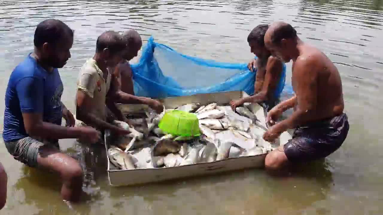 This video shows different types of fish and fishermen fishing