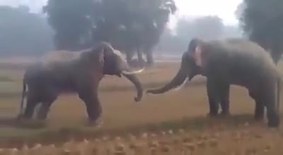 Yes, it is seen that two elephants are fighting fiercely