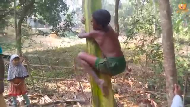 It's a game of climbing a banana tree