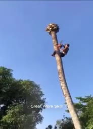 The_Most_Dangerous_Sawyer_Cutting_Trees_by_Climbing_It_.