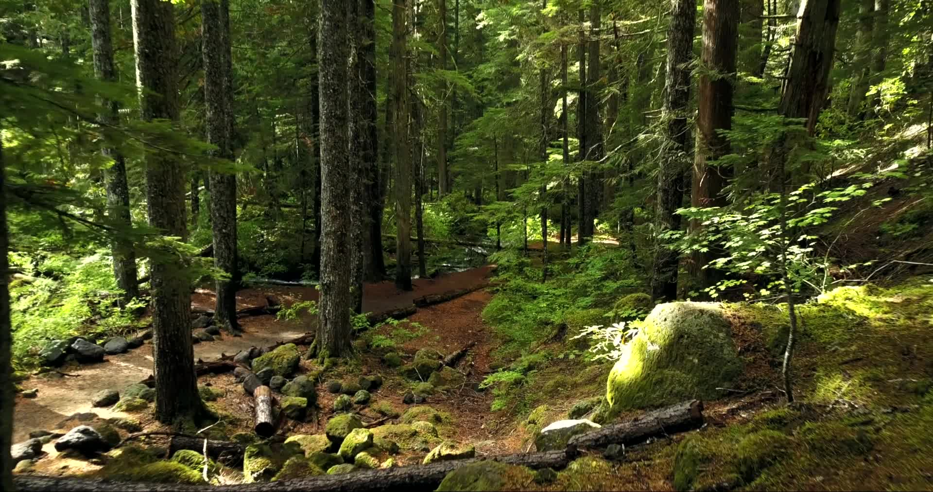 Wonderful sight of forest