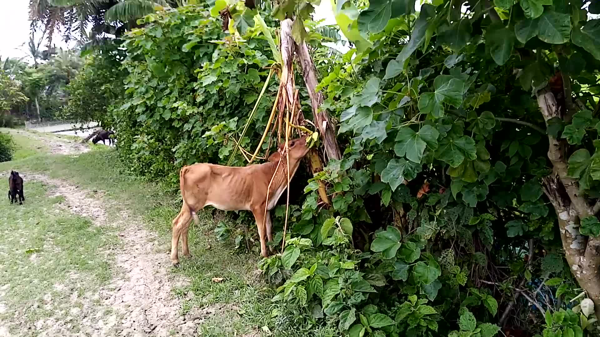 Our village is Satkhira, Dhulihar