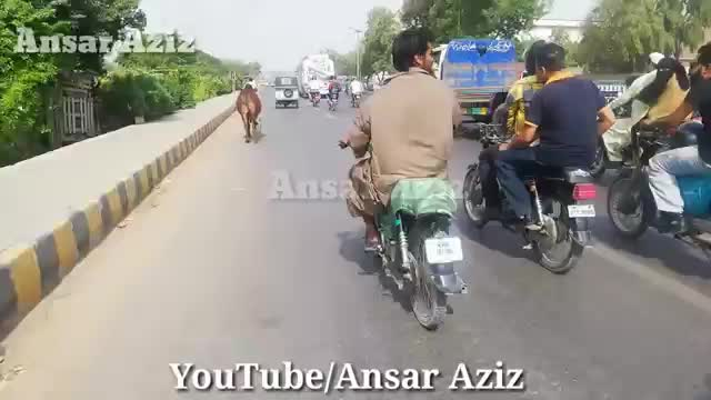 Cow_Qurbani___Funny_Compilation_of_Cow_Running_in_Karachi_Road___Eid_Ul_Adha.
