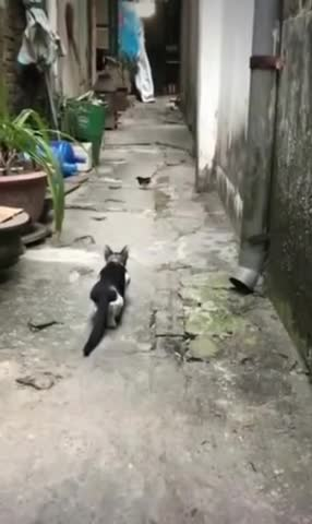 A hunter cat