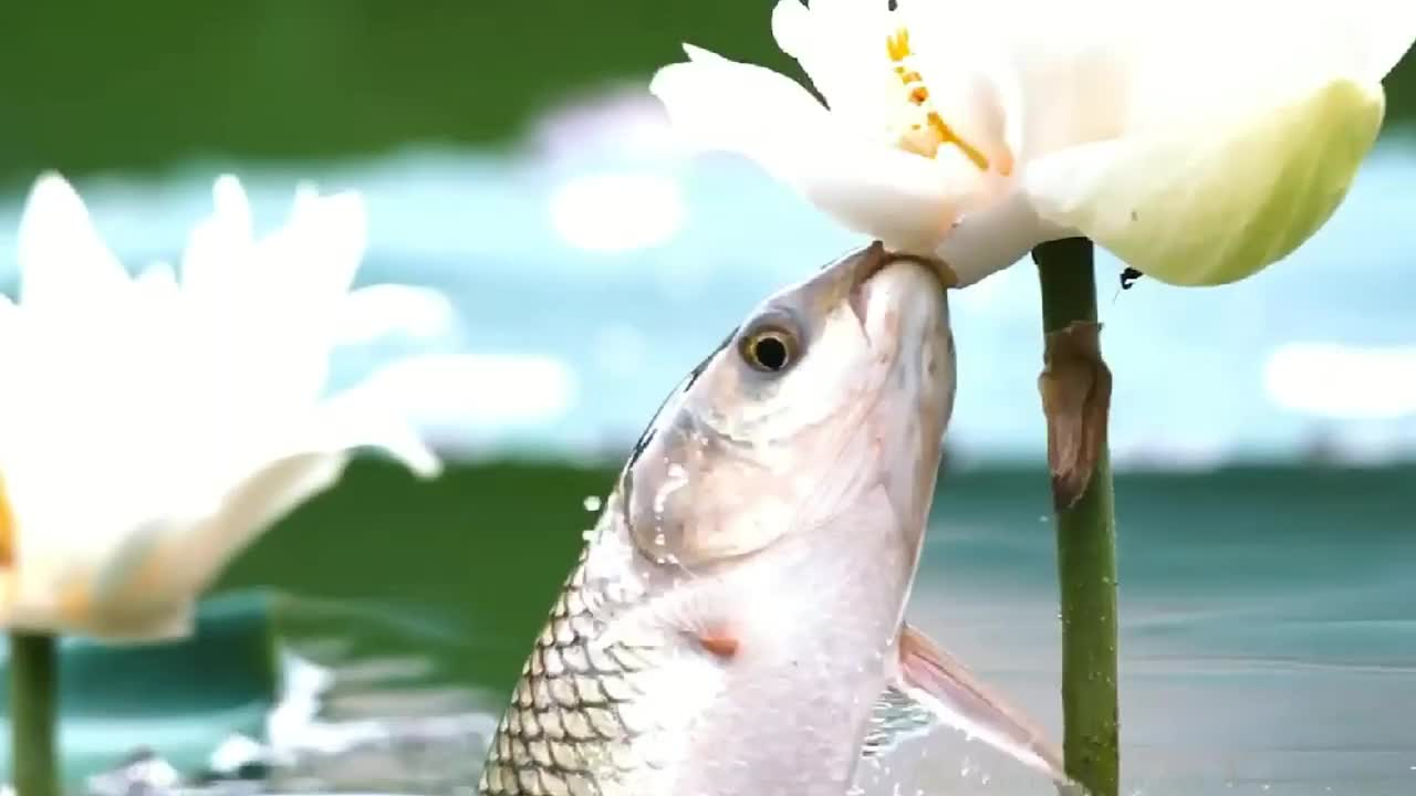 Video of fish eating nicely