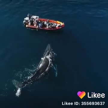 A video of a sea whale showing a very large whale
