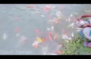 This video shows how a farmer benefits by farming fish in his house